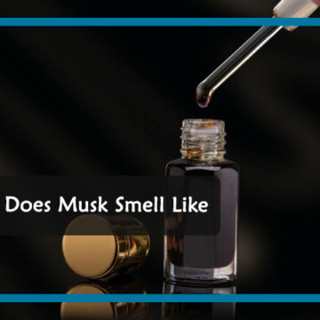 What Does Musk Smell Like