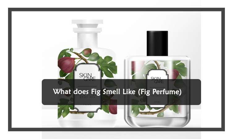 What does Fig Smell Like